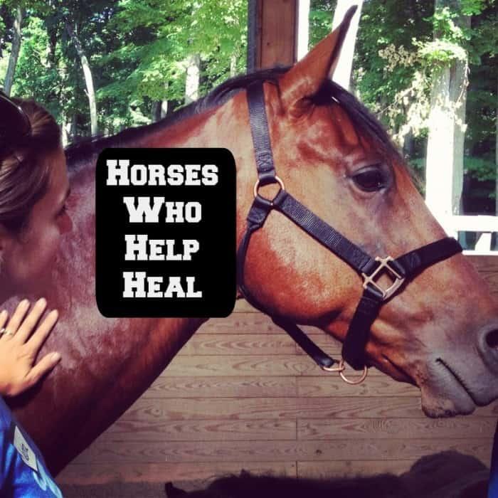 horses who help heal