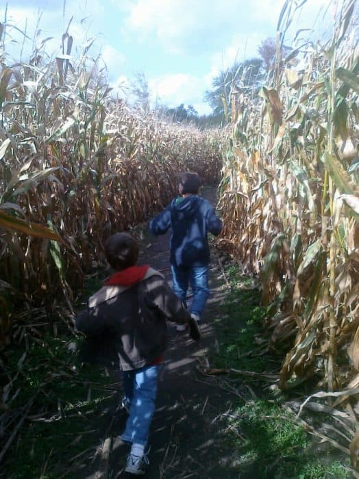 visit a corn maze