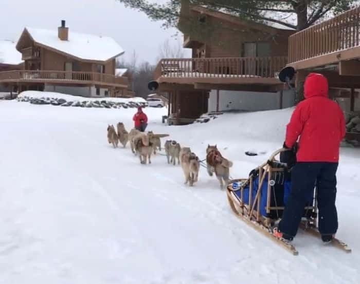 dog sledding in Michigan