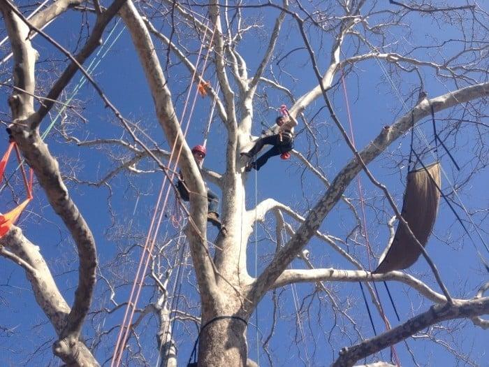 Earth Joy tree Adventures
