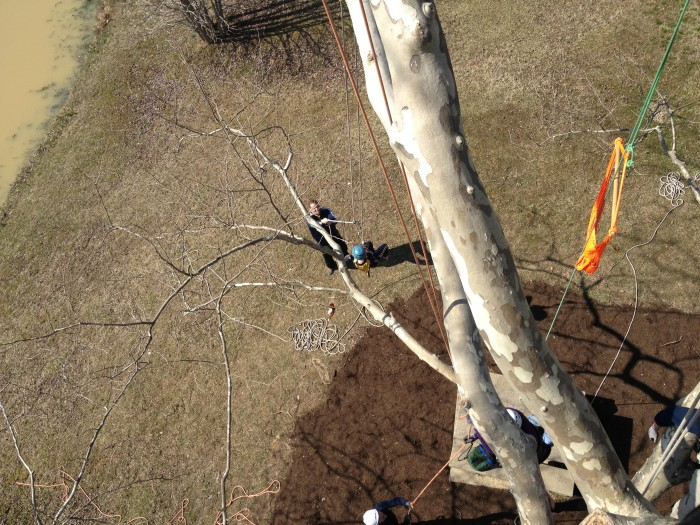 Extreme Tree Climbing with Earth Joy Tree Adventures