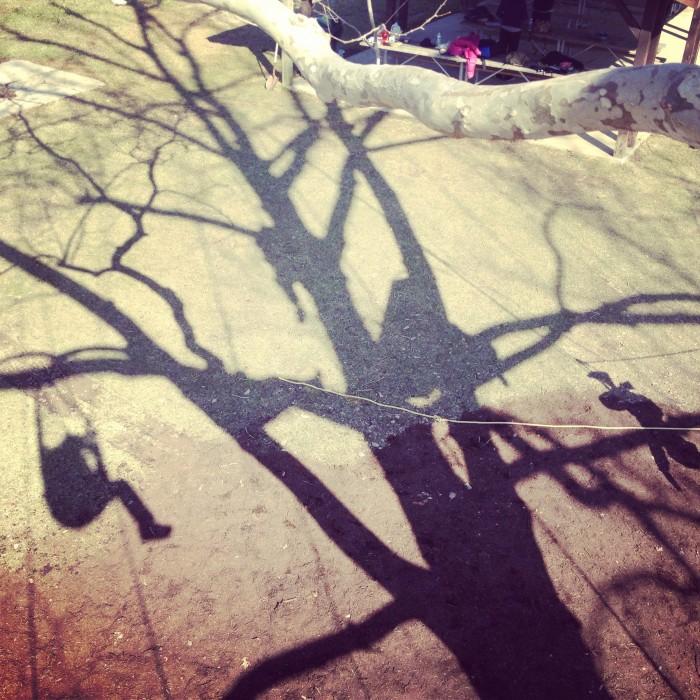 Extreme Tree Climbing with Earth Joy Tree Adventures