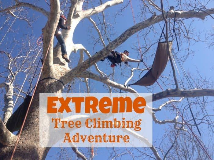 extreme tree climb