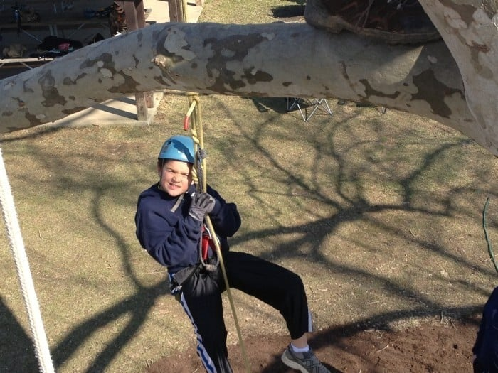 extreme tree climbing