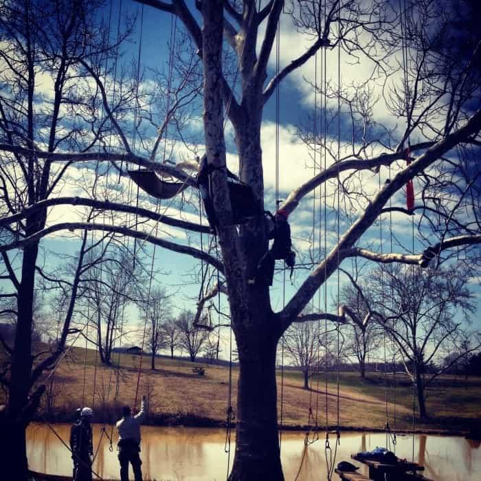 tree with climbing gear