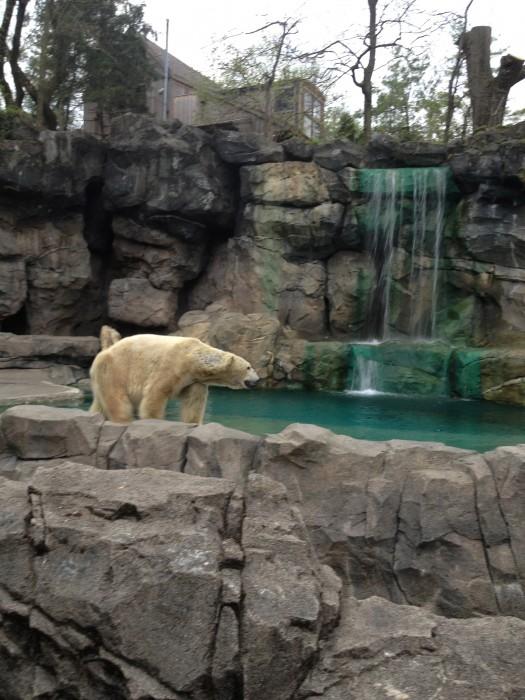Www Bing Com1 Microsoft Way Redmond: Tunes & Blooms At The Cincinnati Zoo