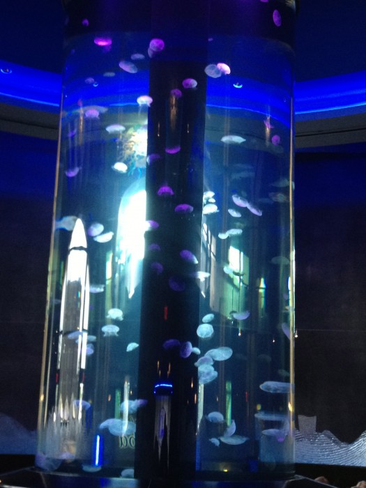 World's Largest Private Jellyfish Aquarium
