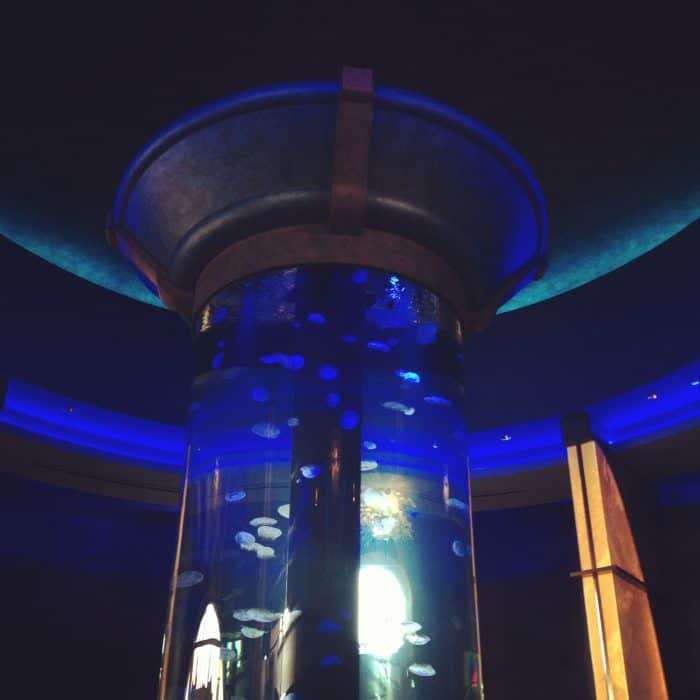 World's Largest Private Jellyfish Aquarium Coba Cocina