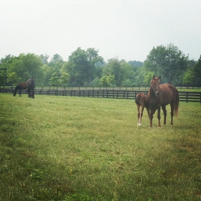 Unique Horse Farm Tour Lexington, Kentucky