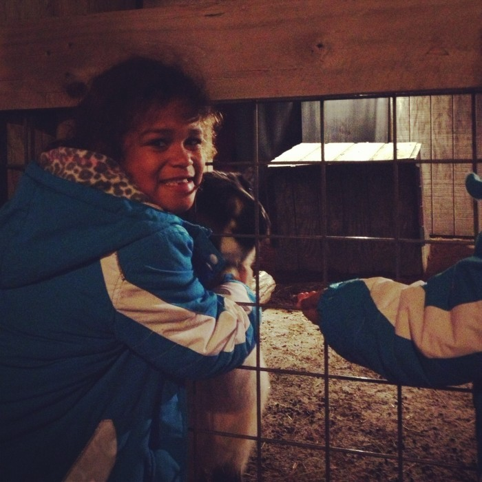 petting zoo at ChristmasTown at the Creation Museum