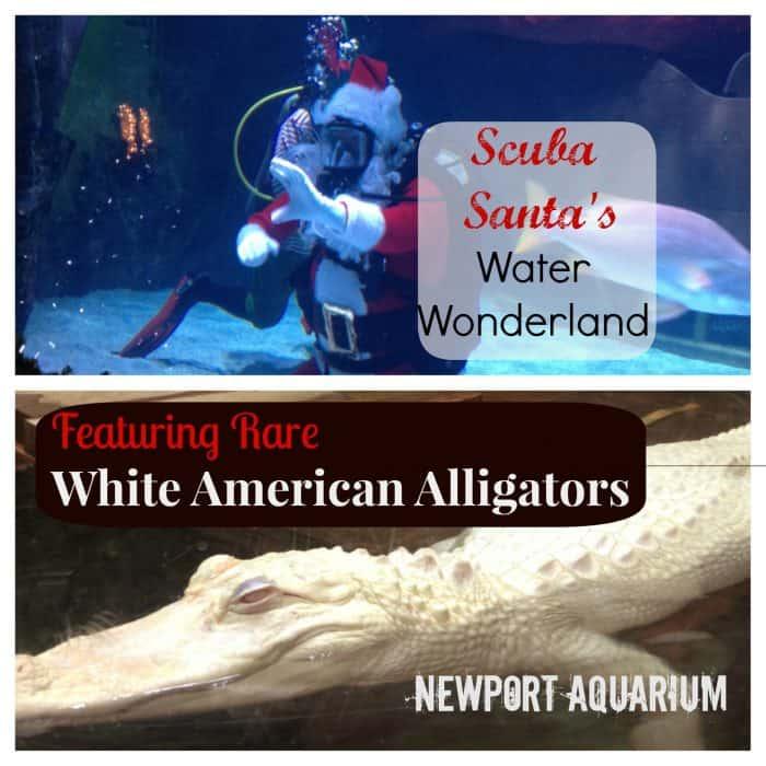 Scuba Santa at Newport Aquarium
