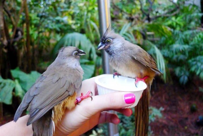 Feeding Birds at Discovery Cove Orlando Florida