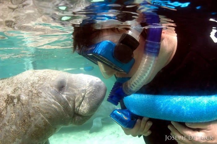 Fun to Dive Charters Swim with Manatees Florida