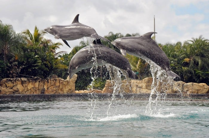 swim with dolphins Discovery Cover Orlando Florida