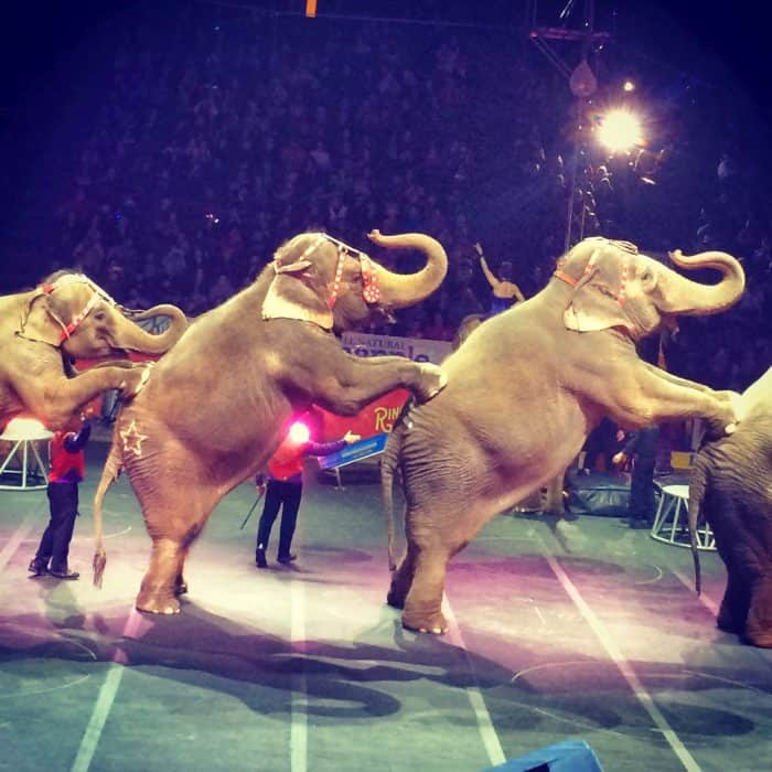 Ringling Bros and Barnum & Bailey Circus US Bank Arena