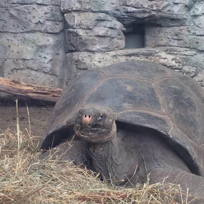 Turtle Canyon Exhibit at Newport Aquarium