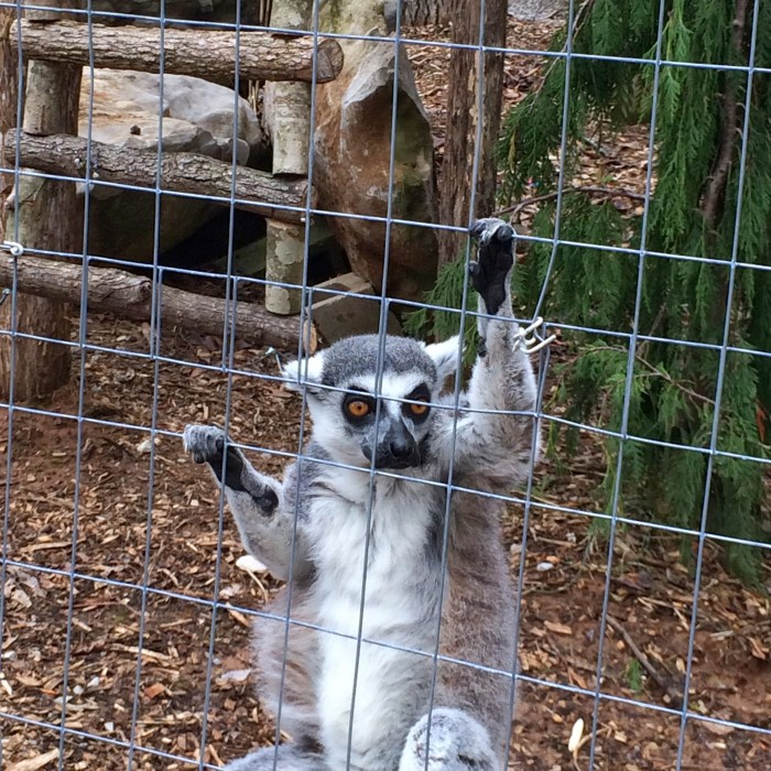 Kentucky Down Under Australian themed Animal Park