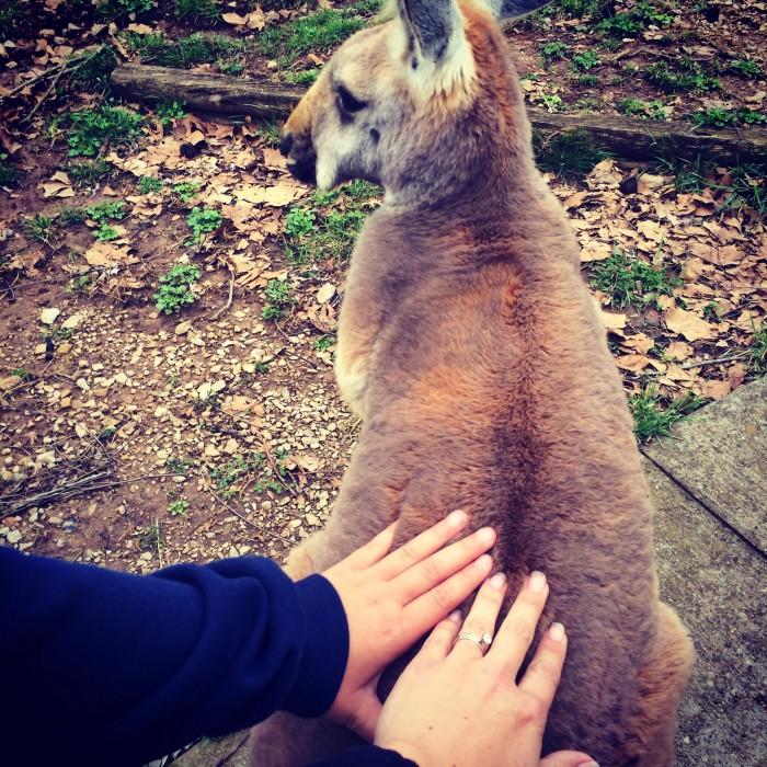 Kentucky Down Under Australian animal theme park