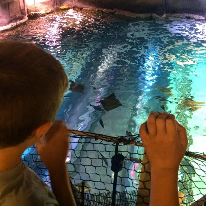 Newport Aquarium Newport, Kentucky