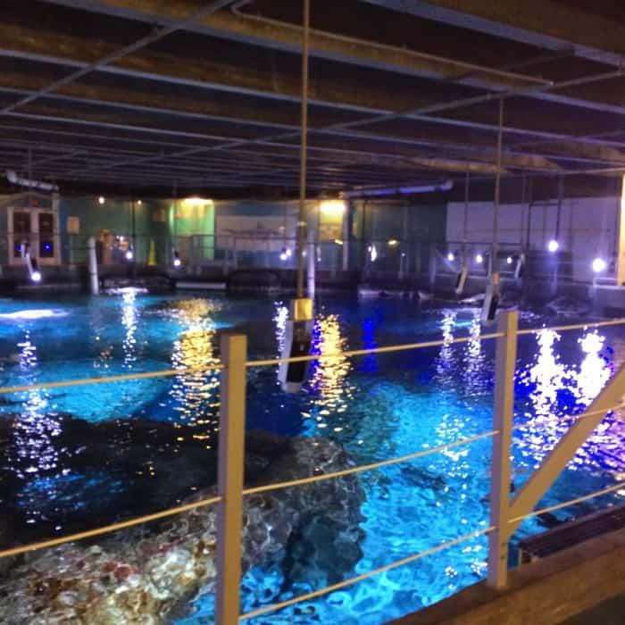 Summer Camps At The Newport Aquarium 50 Discount