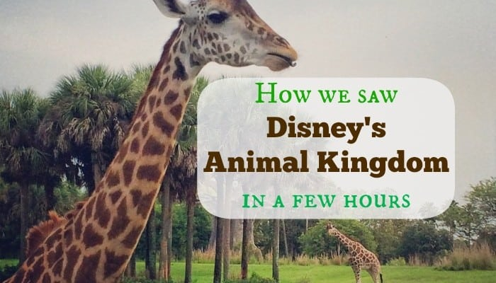 How we saw Disney's Animal Kingdom in a few hours
