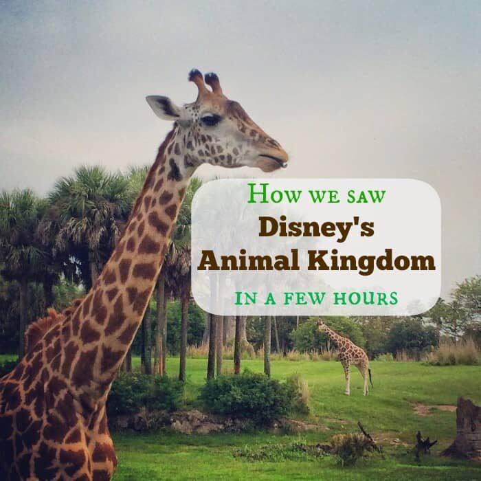 How we saw Disney's Animal Kingdom in a few hours