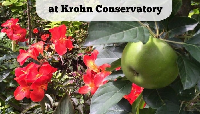 """The Edible Landscape"" Exhibit at Krohn Conservatory ~Giveaway"