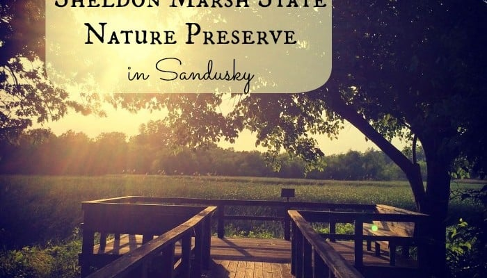 Sheldon Marsh State Nature Preserve in Sandusky
