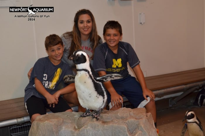 Penguin Encounters at the Newport Aquarium