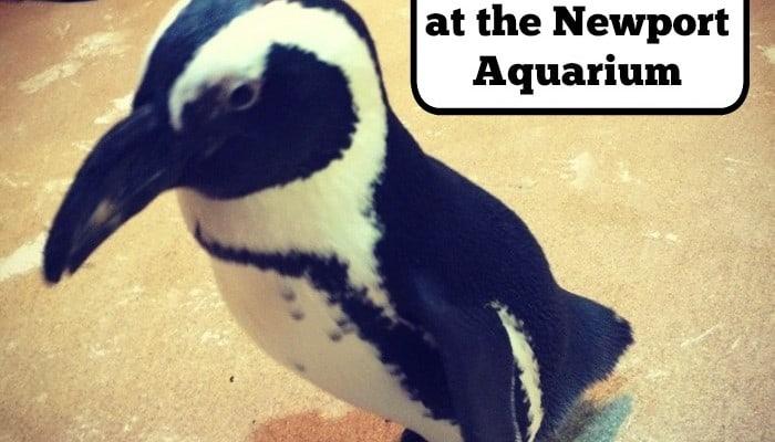 Penguin Encounters at Newport Aquarium
