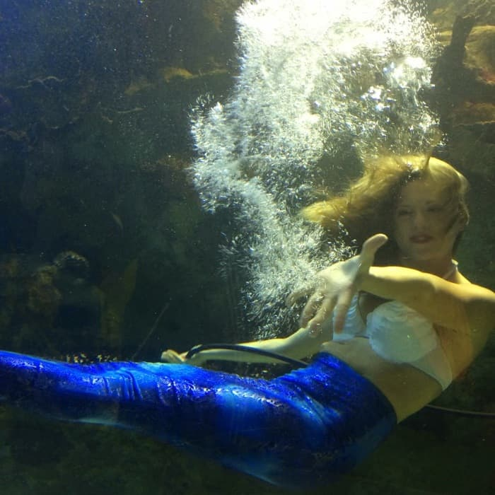 Mermaids at Newport Aquarium