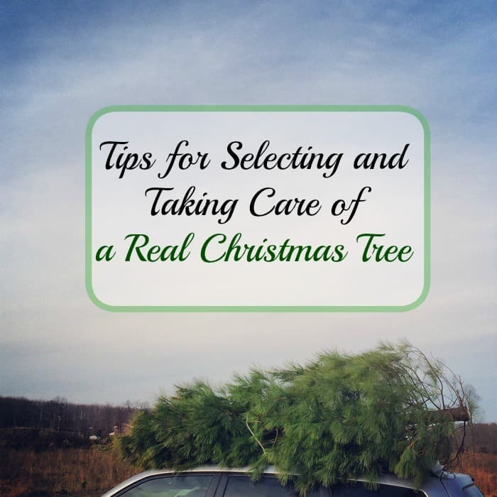 Tips for Selecting and Taking Care of a Real Christmas Tree