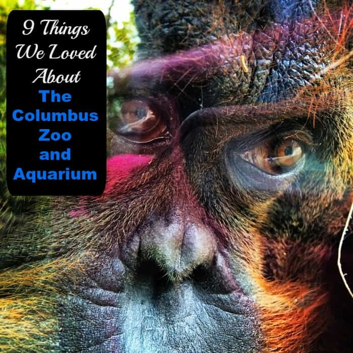 9 Things We Loved About The Columbus Zoo And Aquarium