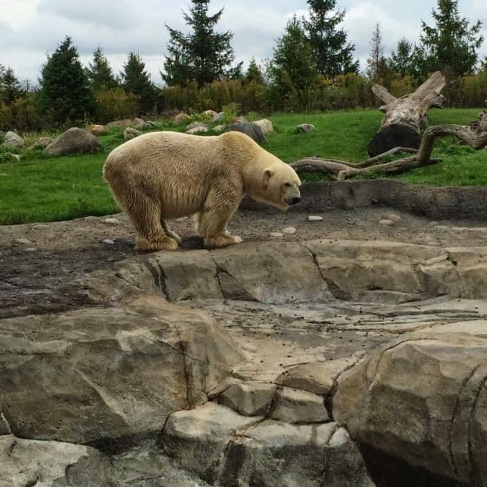 the Columbus Zoo and Aquarium