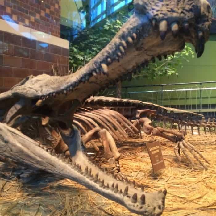 Children's Museum of Indianapolis33