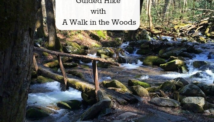 """Exploring Nature With Children"" Guided Hike with A Walk in the Woods"