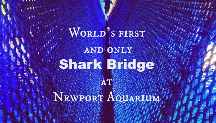World's first and only Shark Bridge at Newport Aquarium