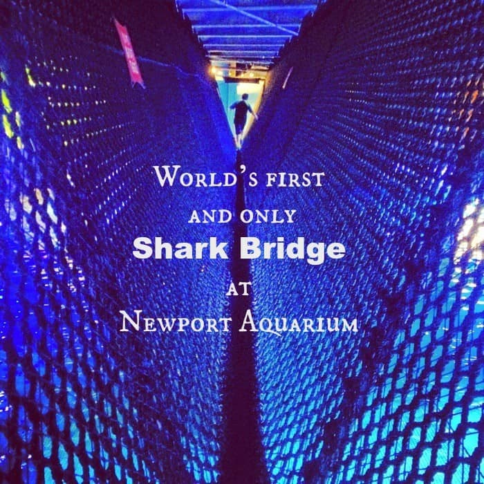 World's first and only shark bridge at Newport Aquarium