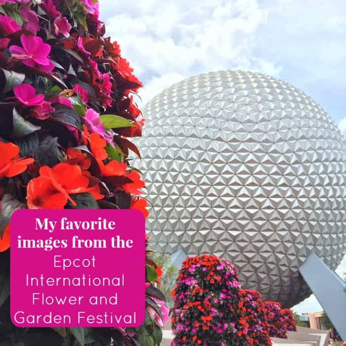 My favorite images from the Epcot International Flower and Garden Festival