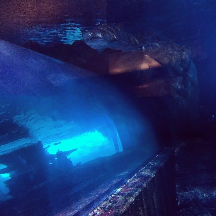 Newport Aquarium 13