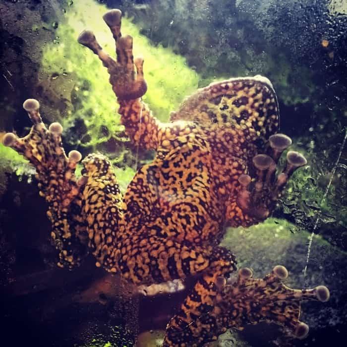 Newport Aquarium 14