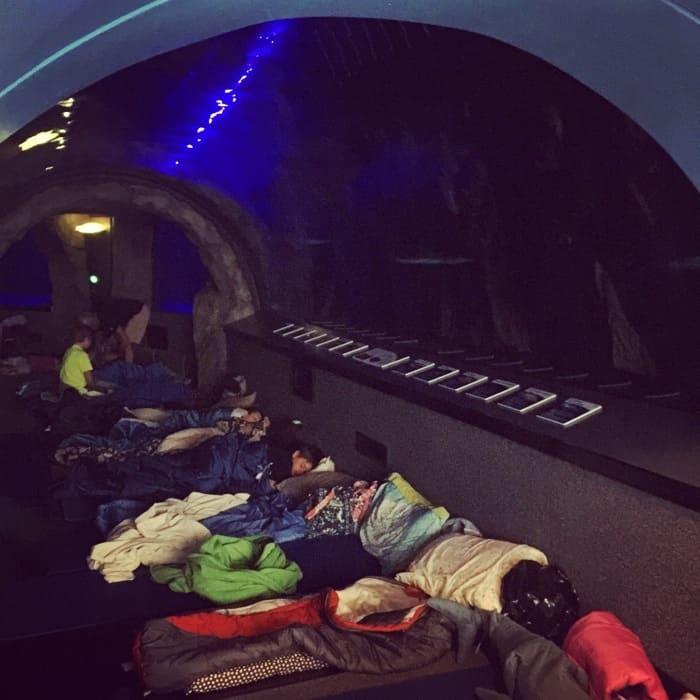 Newport Aquarium 15