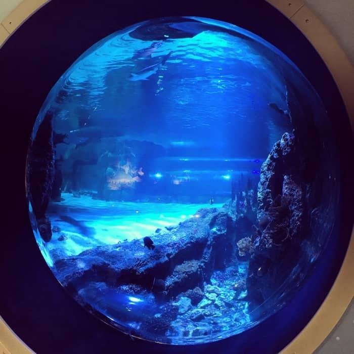 Newport Aquarium 2