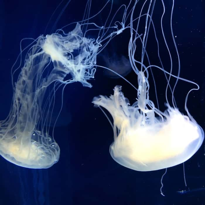 Newport Aquarium 3
