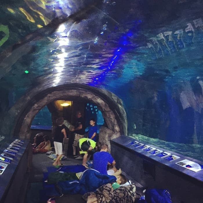 Newport Aquarium 6