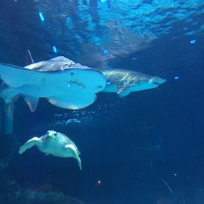 Overnight at the Aquarium