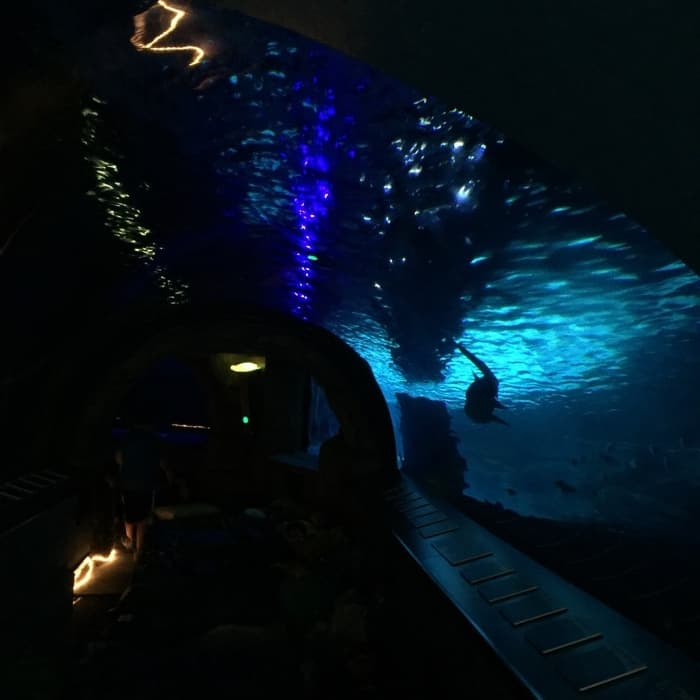 Overnight at the Aquarium 16