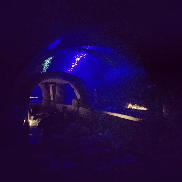 Overnight at the Aquarium 21