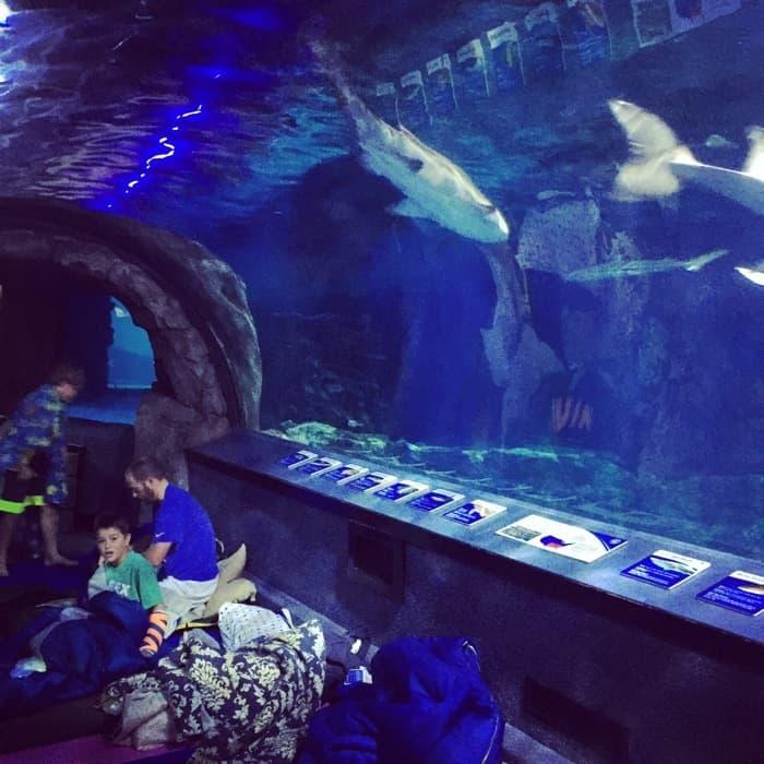 Overnight at the Aquarium 22