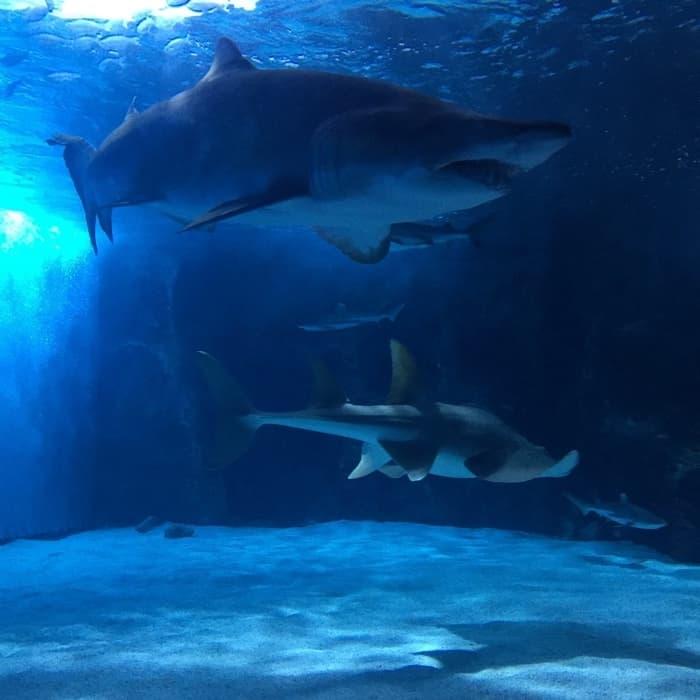 Overnight at Newport Aquarium